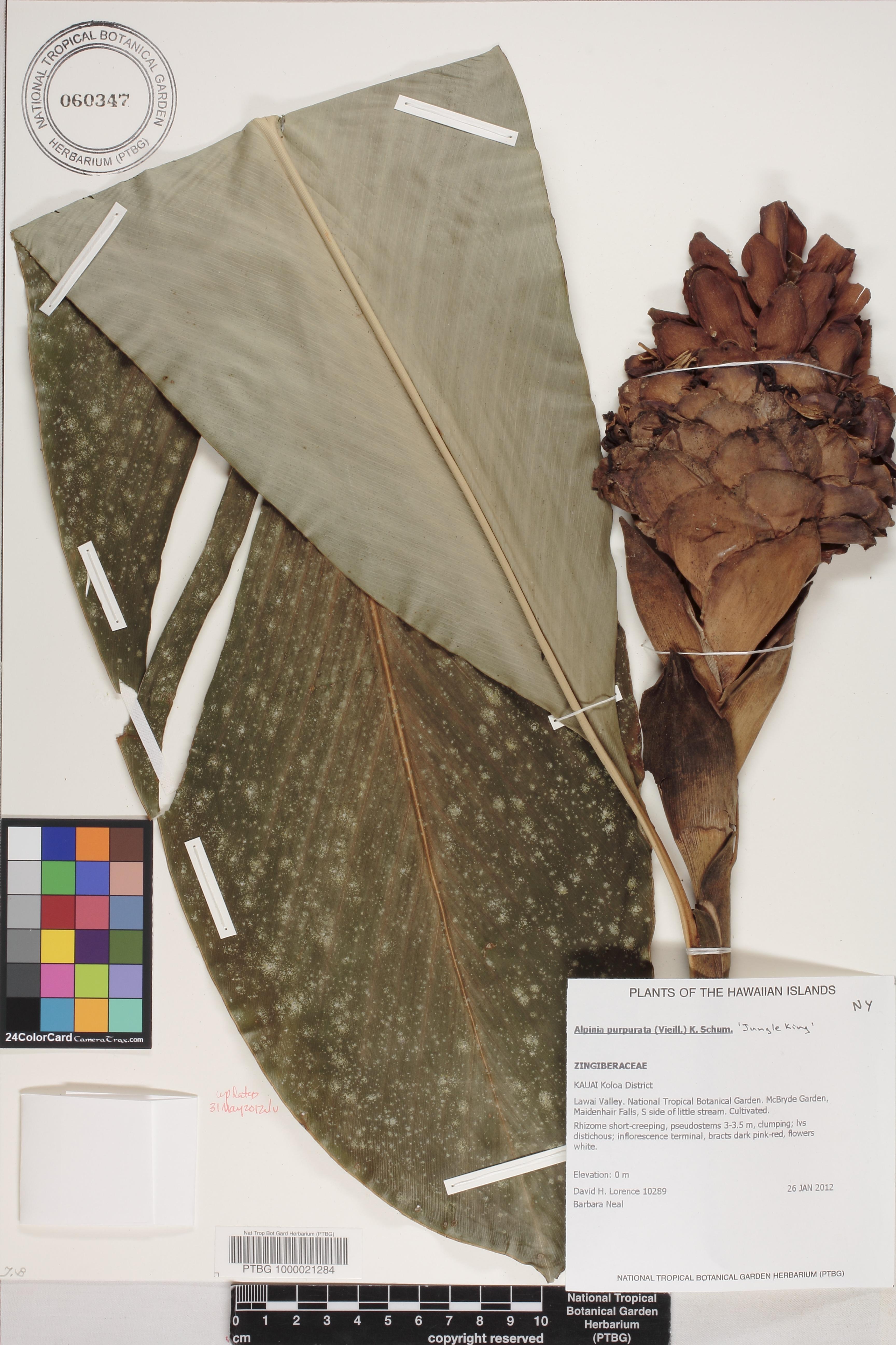 NTBG Herbarium Search Engine - Herbarium Sheet | National Tropical ...