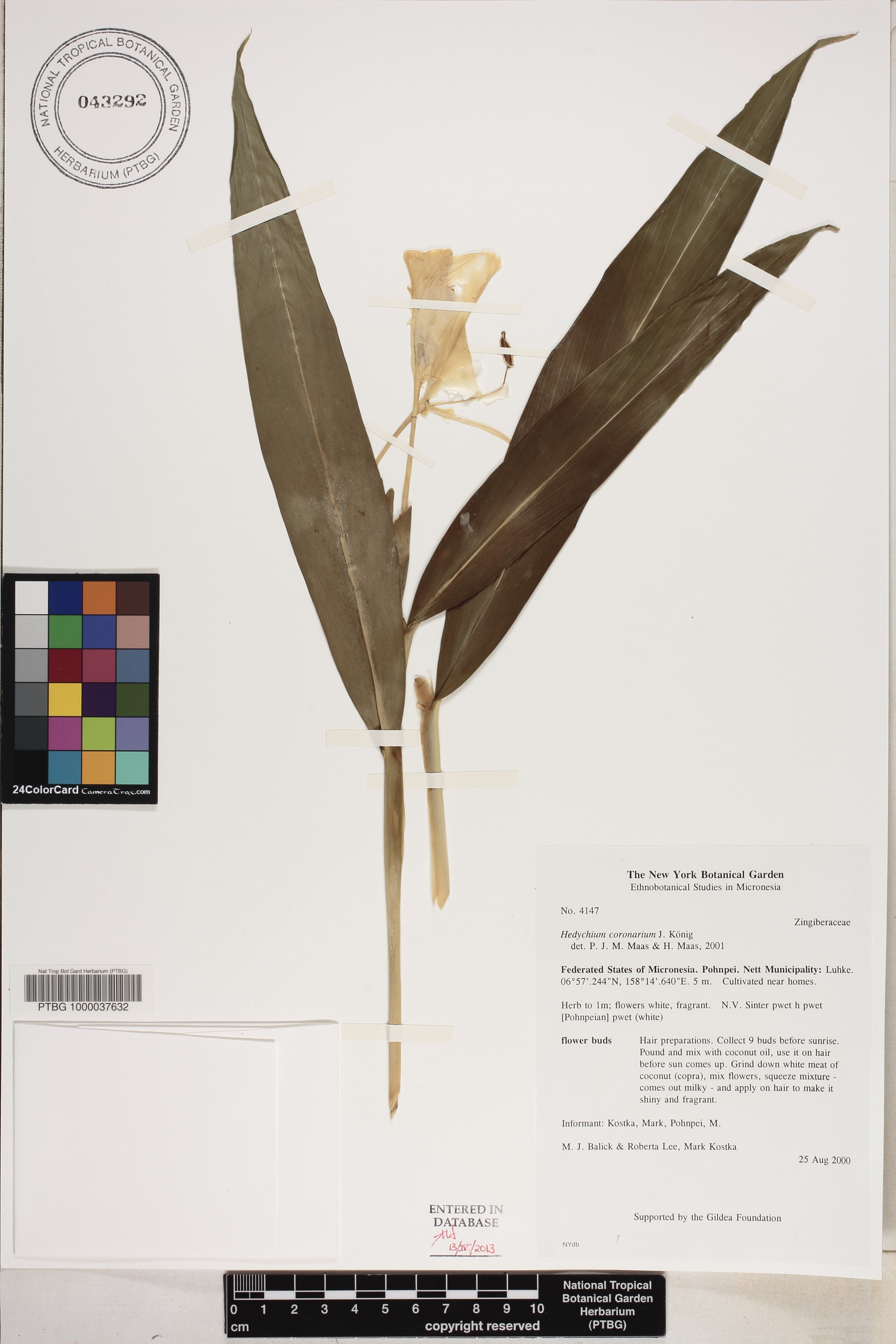 Ntbg Herbarium Search Engine Herbarium Sheet National Tropical